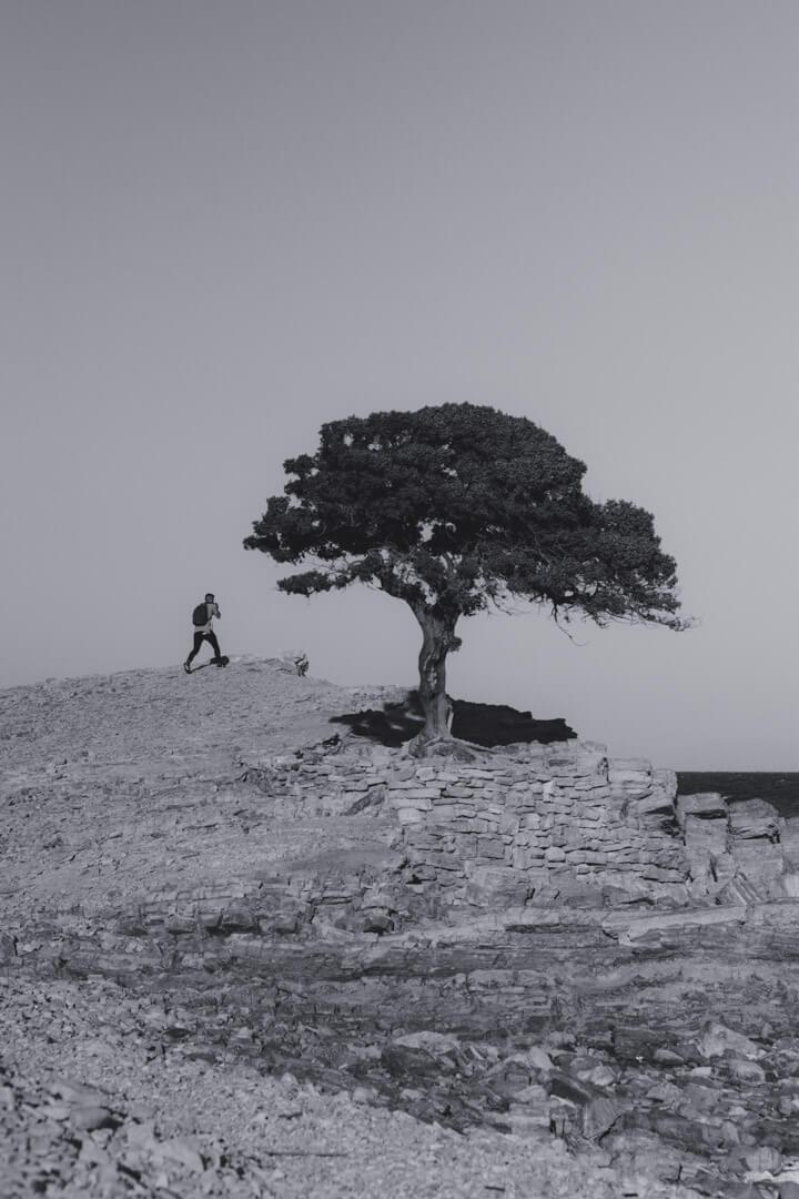island-man-walk-tree